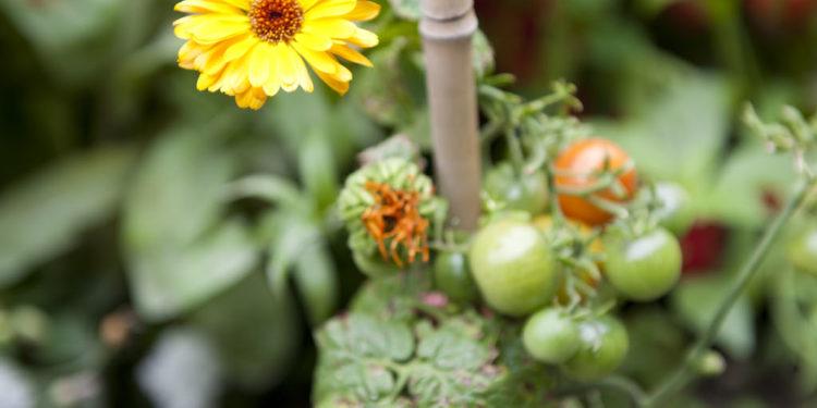 20. Sept: Workshop Pflanzengesundheit