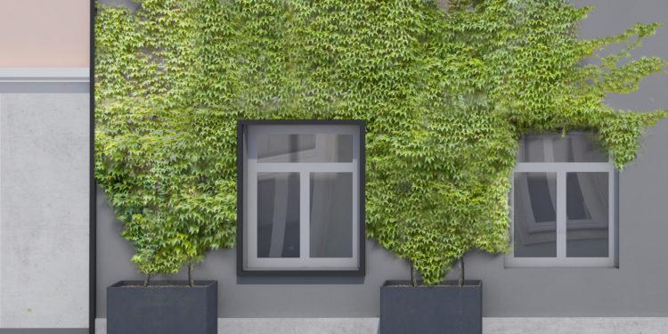 Fassaden-Begrünung – so geht's!