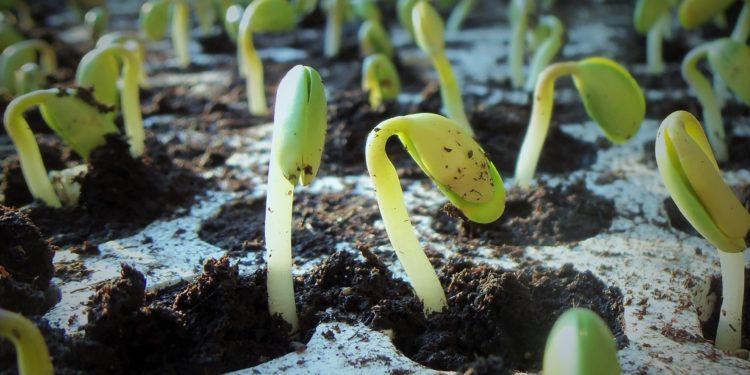 WS: Anbauplanung und Jungpflanzenzucht