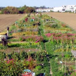 Gemeinsame LandwirtschaftWilde Rauke
