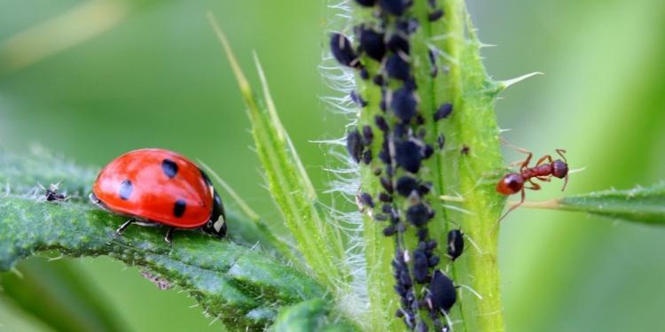 Gartenpraxis: Pflanzengesundheit