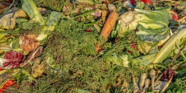 Gartenpraxis: Kompost erzeugen
