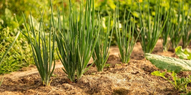 Gartenpraxis: Mulchen