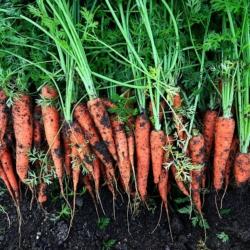 vegetables-Rene-Rauschenberger-Pixabay